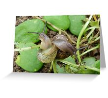 Slugs & Snails & Puppy dog tails Greeting Card