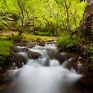 The enchanted river by Saverio Savio