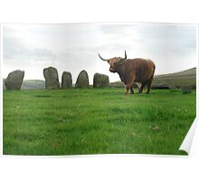 Highlander cows in stone circle, England Poster