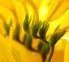 How joyful is yellow! by byzantinehalo