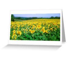 sunflowers in Buffalo Greeting Card