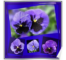 Got the Blues - Purple Pansies Collage Poster