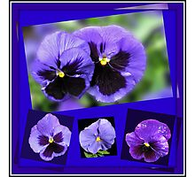 Got the Blues - Purple Pansies Collage Photographic Print