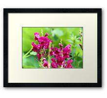 Hot pink flowers Framed Print