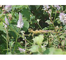 Nature - Beauty at its MAX Photographic Print