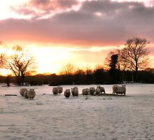 Winter Sheeps by JEZ22