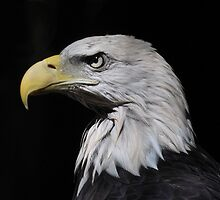 Eagle Head by Lynda  McDonald
