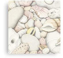 Shells and Pebbles Canvas Print