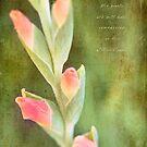 Gladiolus Buds by JulieLegg