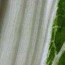 growing green by yvesrossetti