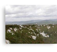 Bog Cotton Metal Print