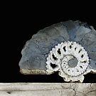 time spiral. ammonite by Nikolay Semyonov