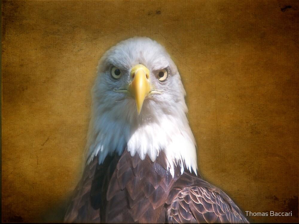 Bald Eagle Portrait by TJ Baccari Photography