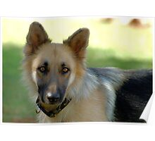 THE GERMAN SHEPHARD - SHEILA.. HARRY'S MOTHER Poster