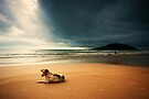 Dog day afternoon by Vikram Franklin