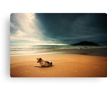 Dog day afternoon Canvas Print