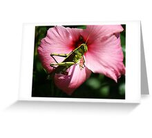 Grasshopper on a Pink Flower Greeting Card