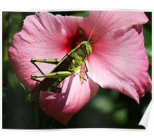Grasshopper on a Pink Flower Poster