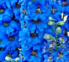 Blue, Blue Delpheniums Sticker