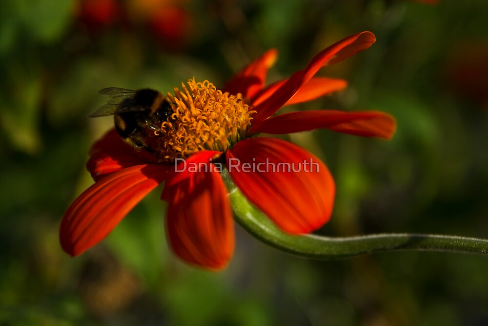 Bees by Dania Reichmuth