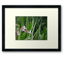 A Dash of Beauty Framed Print