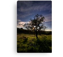 Star of the evening Canvas Print