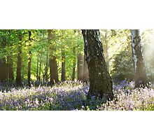 Woodland Colour Photographic Print