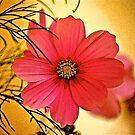 Cosmea Flower by Mike  Waldron