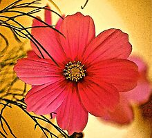 Cosmea Flower by Mike  Waldron