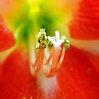 Orange Amaryllis Close Up by jerryfrencho