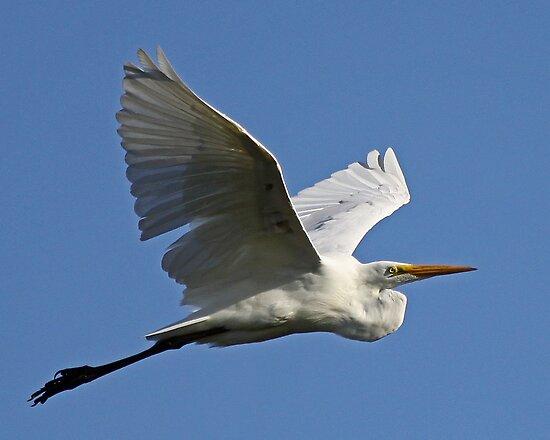 Beauty in Flight by Chuck Gardner