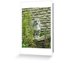 Who is the prey Greeting Card