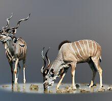 KUDUS - NAMIBIA by Michael Sheridan