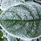 Frosted Leaf by LinneaJean