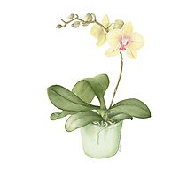 Orchid in a Green Pot Photographic Print