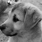Puppy Profile by LinneaJean