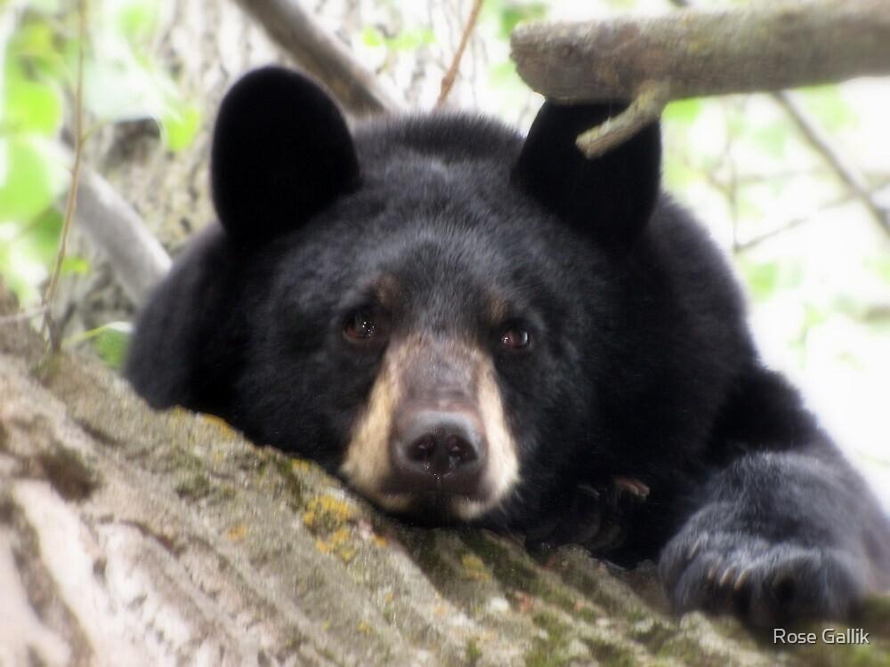 It's Tough Being A Bear by Rose Gallik