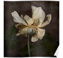 Rust 'n Roses ~ No 17 Poster
