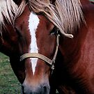Horses by jammingene