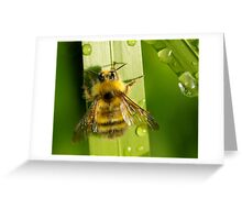 Bombus Mixtus: A Fuzzy Yellow Insect-Bear Greeting Card