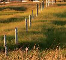 Fence Posts by Debbie  Roberts
