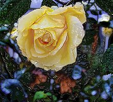 A Rose by Any Other Name by rocamiadesign