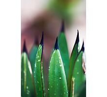 Agave Leaves Photographic Print