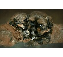 Strudel & Schnitzel.....4 weeks and 1 day old Photographic Print