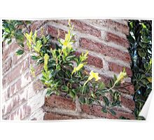 Yellow Wall Climber (photo) Poster