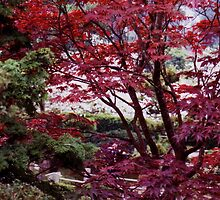 japanese maple trees,golden gate park by califpoppy1621