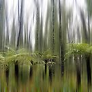 Ferns blur by Greg Carrick