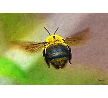 Bumblebees Flight Photographic Print