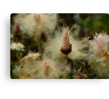 Miracle Flower Canvas Print