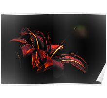 Lily Red-Black Poster